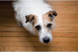 Epilepsy in  Pets