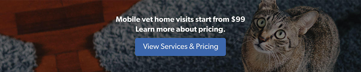 View Services & Pricing